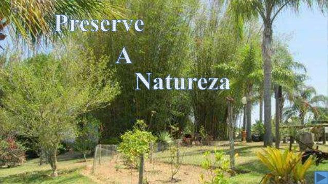 Cuide da Natureza  Ame os animais  Zele pelas plantas