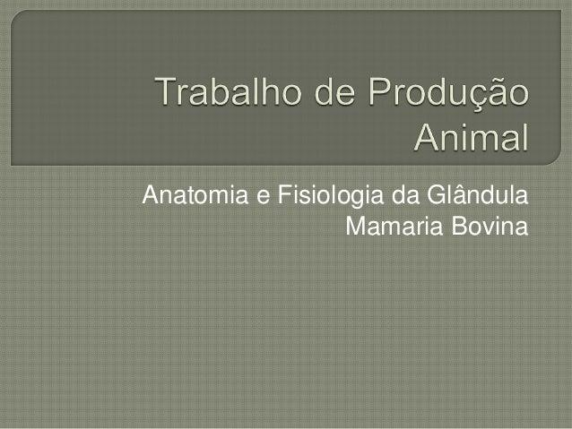Anatomia e Fisiologia da Glândula  Mamaria Bovina