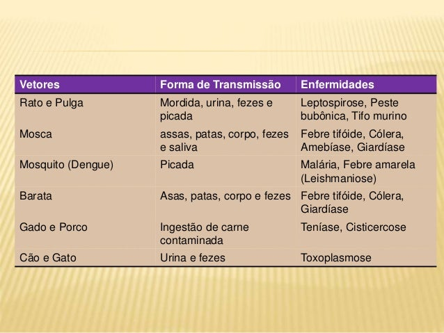 Vetores Forma de Transmissão Enfermidades Rato e Pulga Mordida, urina, fezes e picada Leptospirose, Peste bubônica, Tifo m...