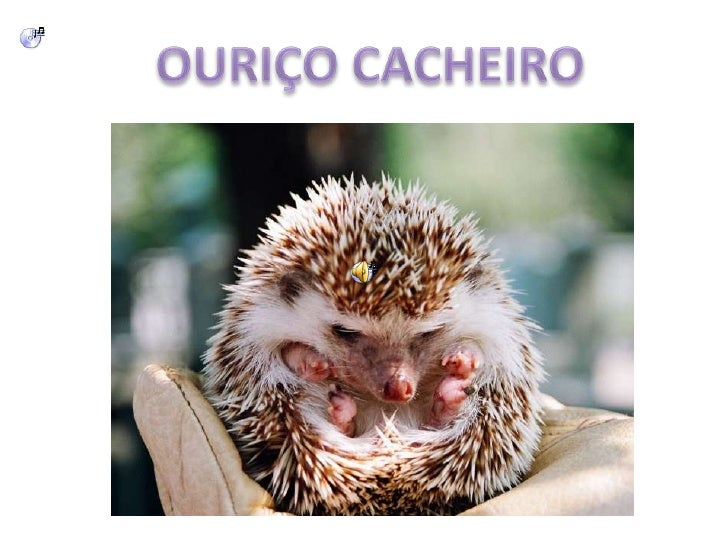 OURIÇO CACHEIRO<br />