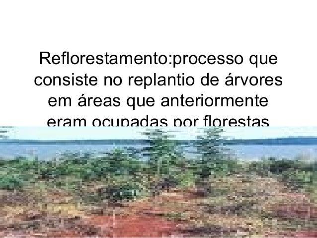 Reflorestamento:processo que consiste no replantio de árvores em áreas que anteriormente eram ocupadas por florestas