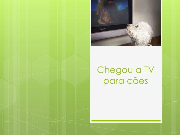 Chegou a TV para cães