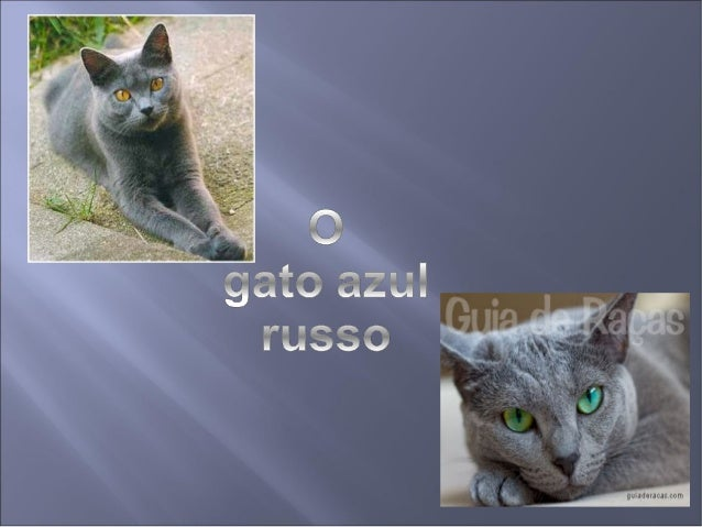 O Gato Azul Russo é uma raça de Gato que tem  um pêlo azul-prateado. São muito inteligentes e  brincalhões, mas são tímido...