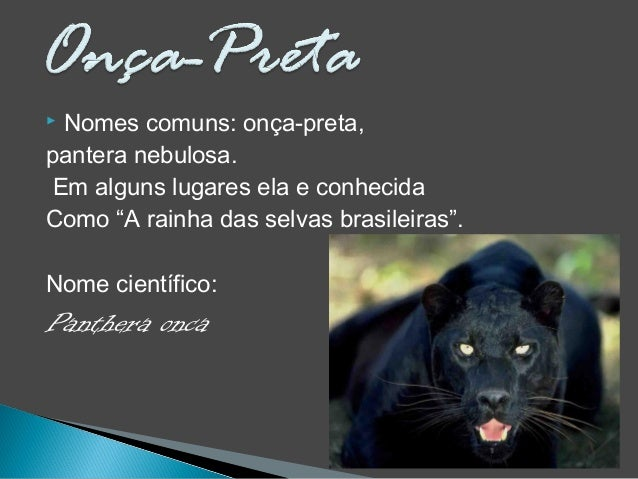 """ Nomes comuns: onça-preta, pantera nebulosa. Em alguns lugares ela e conhecida Como """"A rainha das selvas brasileiras"""". No..."""