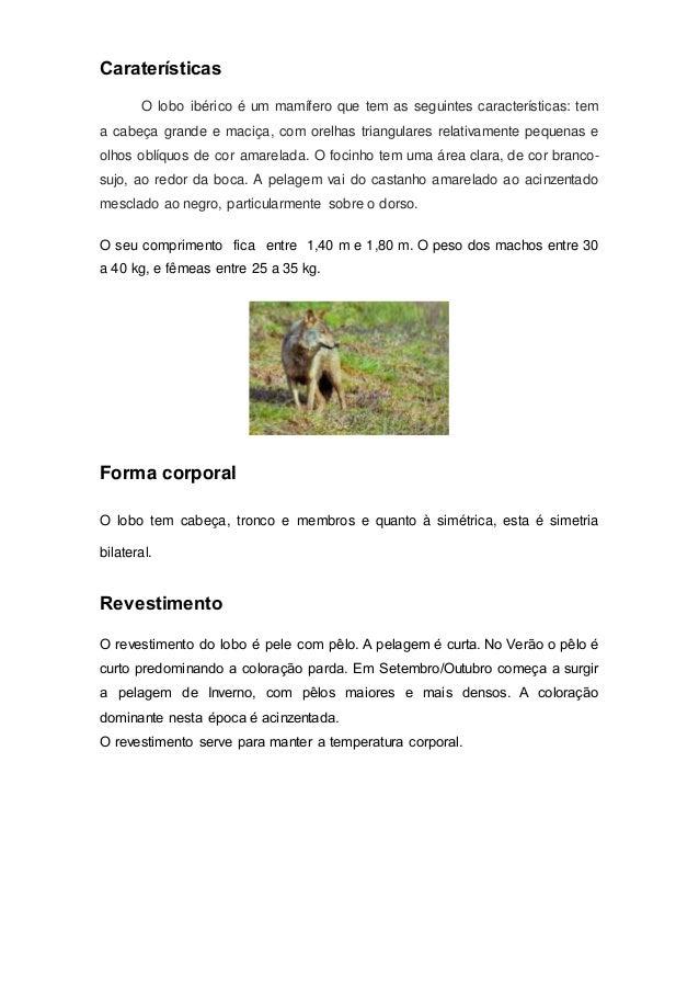 Caraterísticas O lobo ibérico é um mamífero que tem as seguintes características: tem a cabeça grande e maciça, com orelha...
