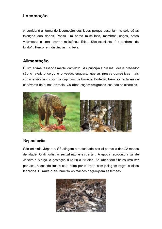 Locomoção A corrida é a forma de locomoção dos lobos porque assentam no solo só as falanges dos dedos. Possui um corpo mus...