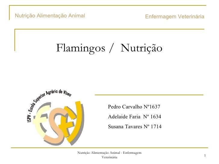Flamingos /  Nutrição  Enfermagem Veterinária  Pedro Carvalho Nº1637 Adelaide  Faria  Nº 1634 Susana Tavares Nº 1714 Nutri...