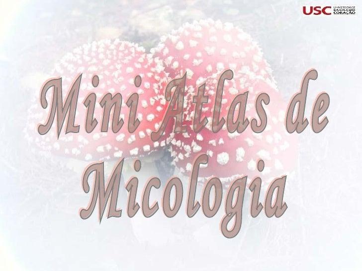 Mini Atlas de  Micologia