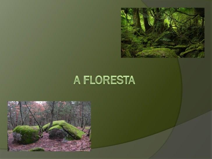 VEM CONHECER A FLORESTA!A Ana Bolota, o Zé Castanha, a Rita Giesta e o João Peniscovão fazer um passeio pela Floresta.    ...