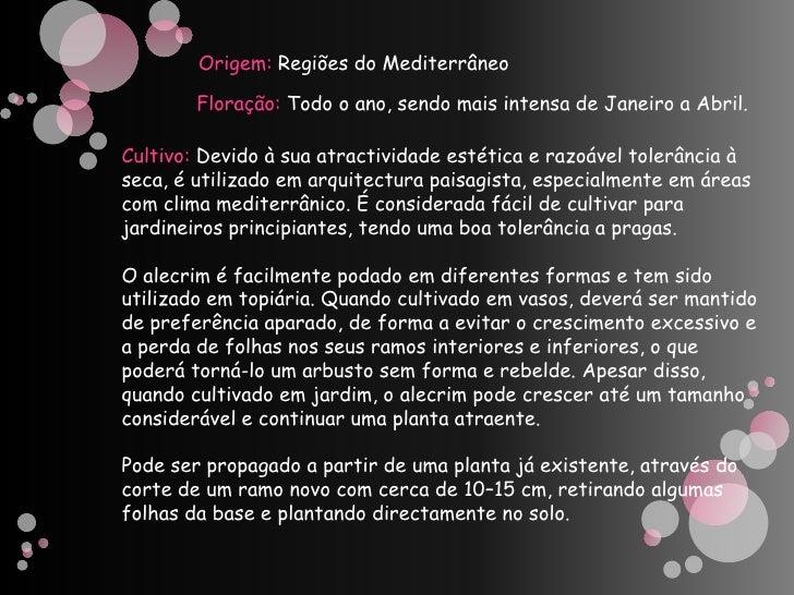Alecrim - Vanessa Henriques e Rafaela - 5ºC Slide 3