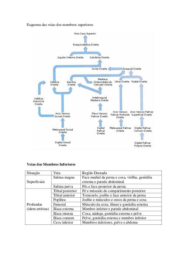Lujoso Diagrama De Arterias Humanas Festooning - Imágenes de ...