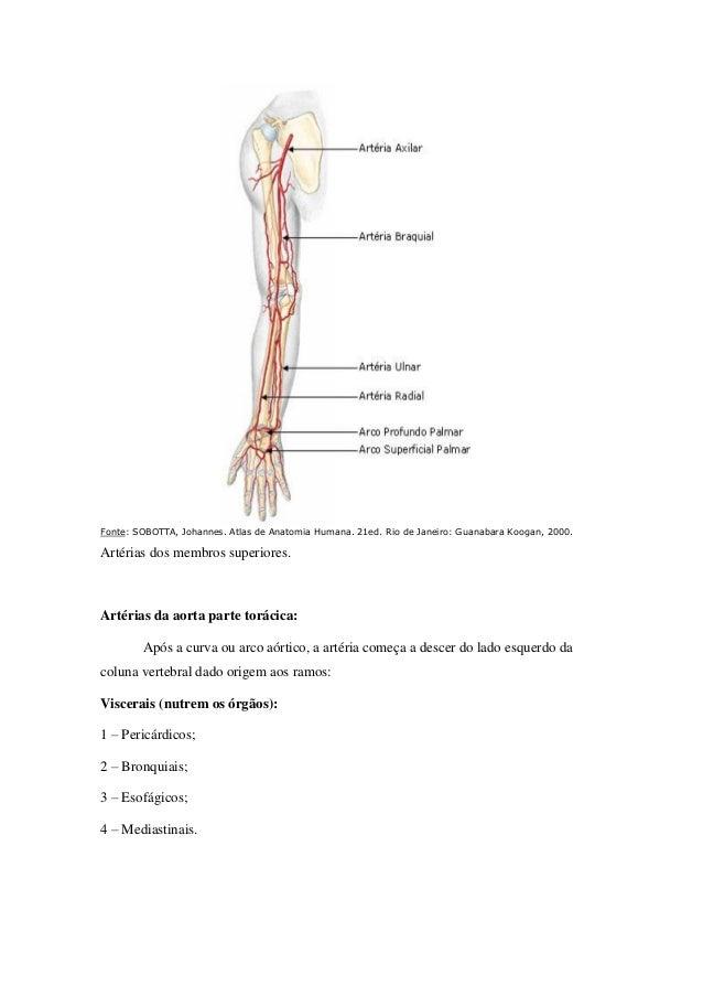 Magnífico Anatomía Vascular Torácica Colección - Anatomía de Las ...