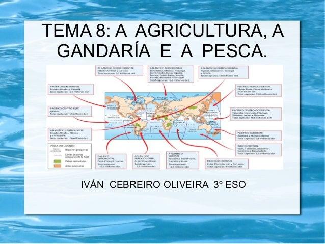 TEMA 8: A AGRICULTURA, A GANDARÍA E A PESCA.   IVÁN CEBREIRO OLIVEIRA 3º ESO