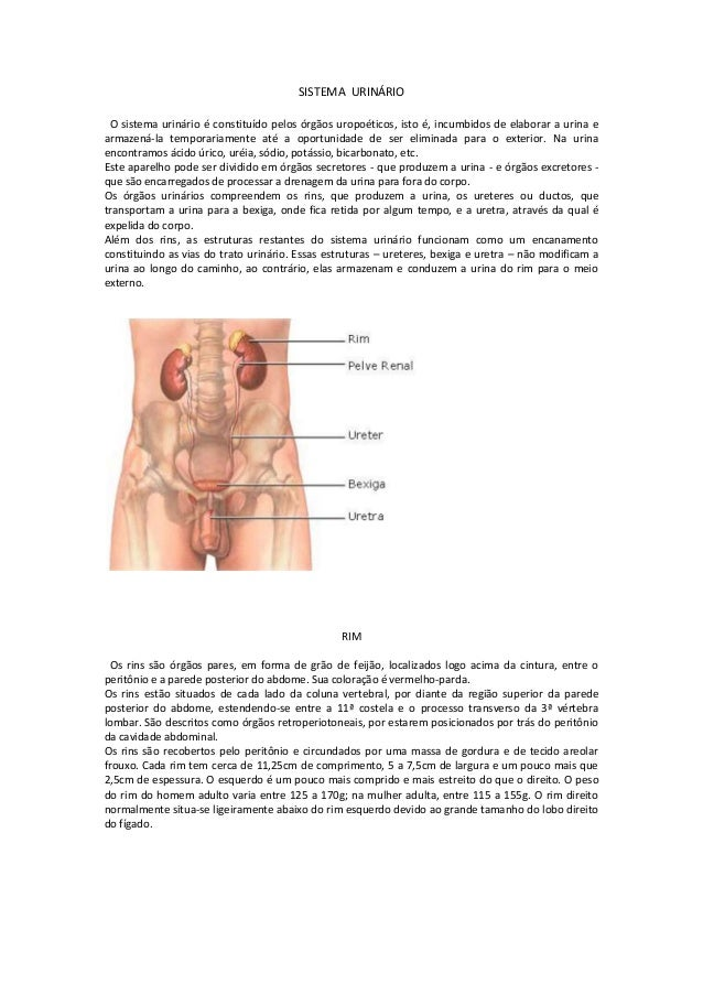 SISTEMA URINÁRIO O sistema urinário é constituído pelos órgãos uropoéticos, isto é, incumbidos de elaborar a urina e armaz...