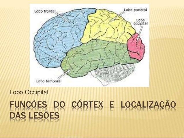 FUNÇÕES DO CÓRTEX E LOCALIZAÇÃO DAS LESÕES Lobo Occipital
