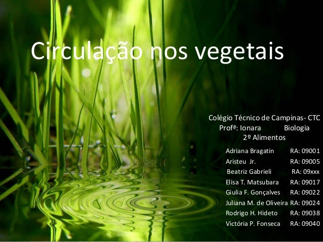 Circulação nos vegetais Adriana Bragatin RA: 09001 Aristeu Jr. RA: 09005 Beatriz Gabrieli RA: 09xxx Elisa T. Matsubara RA:...