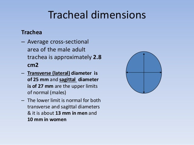Tracheal dimensions  Trachea  – Average cross-sectional  area of the male adult  trachea is approximately 2.8  cm2  – Tran...