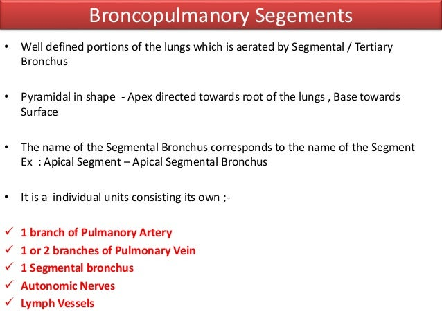 Anatomy of Tracheobronchial Tree and Bronchopulmonary Segments with s…