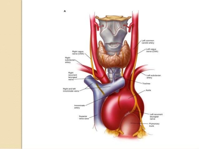 Position of Patient