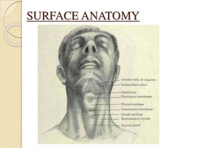 JACKSON'S SAFETY TRIANGLE Triangular space in neck • Base: Lower end of thyroid cartilage • Apex: Suprasternal notch • Sid...