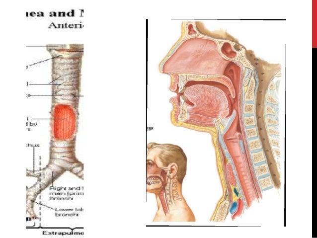 tracheostomy by kanato, Human Body