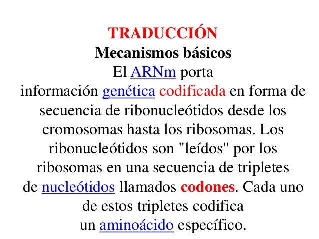 TRADUCCIÓN Mecanismos básicos El ARNm porta información genética codificada en forma de secuencia de ribonucleótidos desde...