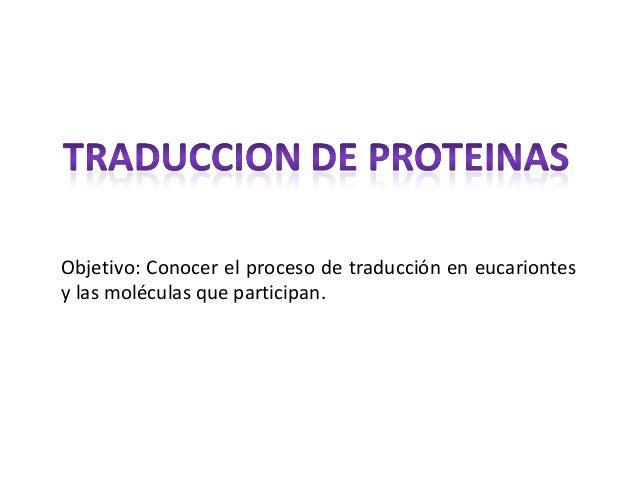 Objetivo: Conocer el proceso de traducción en eucariontes y las moléculas que participan.