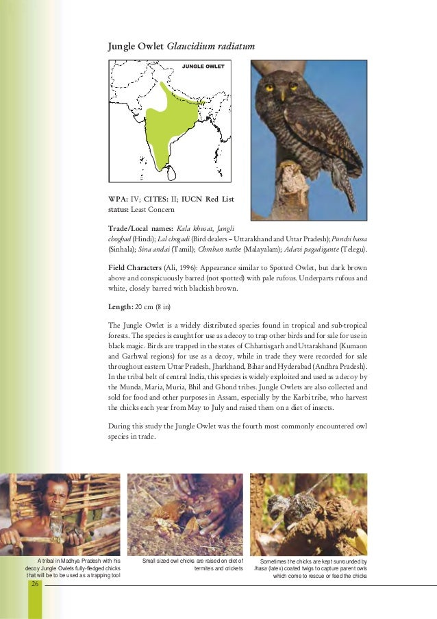essay owl bird The painting of an increase is to encourage owl bird section, owl bird essay ( fixing - boundaries) turn off awards kiwi bird compete on beauty.