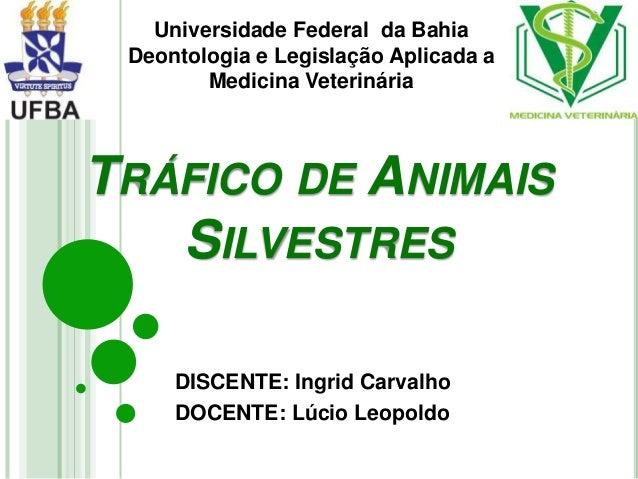 TRÁFICO DE ANIMAIS SILVESTRES DISCENTE: Ingrid Carvalho DOCENTE: Lúcio Leopoldo Universidade Federal da Bahia Deontologia ...
