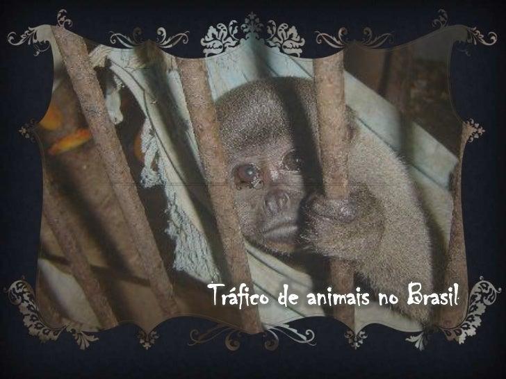 Tráfico de animais no Brasil