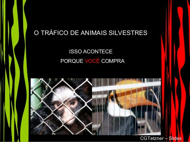 O TRÁFICO DE ANIMAIS SILVESTRES ISSO ACONTECE PORQUE VOCÊ COMPRA CGTetzner – Slides