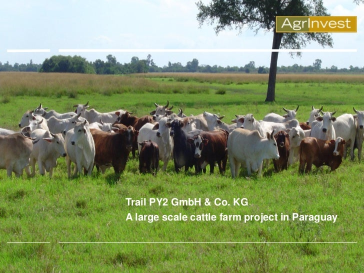 Trail PY2 GmbH & Co. KGA large scale cattle farm project in Paraguay
