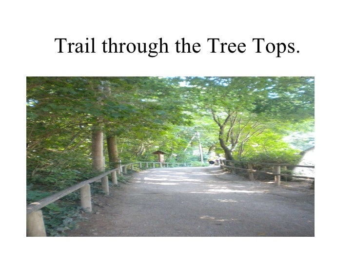 Trail through the Tree Tops.
