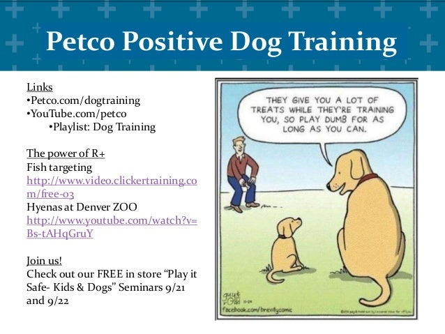 Training Mind Tricks for Dogs