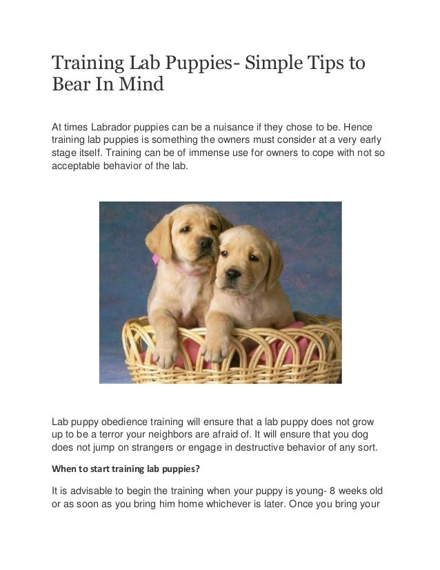 Training Lab Puppies- Simple Tips to Bear In Mind At times Labrador puppies can be a nuisance if they chose to be. Hence t...