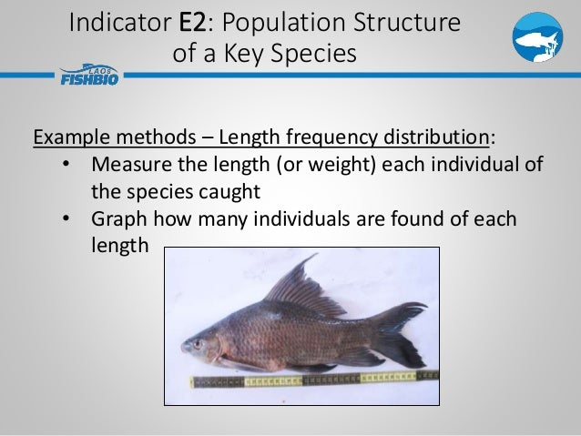 Indicator E2: Population Structure of a Key Species Example methods – Length frequency distribution: • Measure the length ...