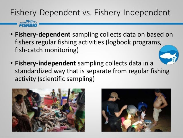 Fishery-Dependent vs. Fishery-Independent • Fishery-dependent sampling collects data on based on fishers regular fishing a...