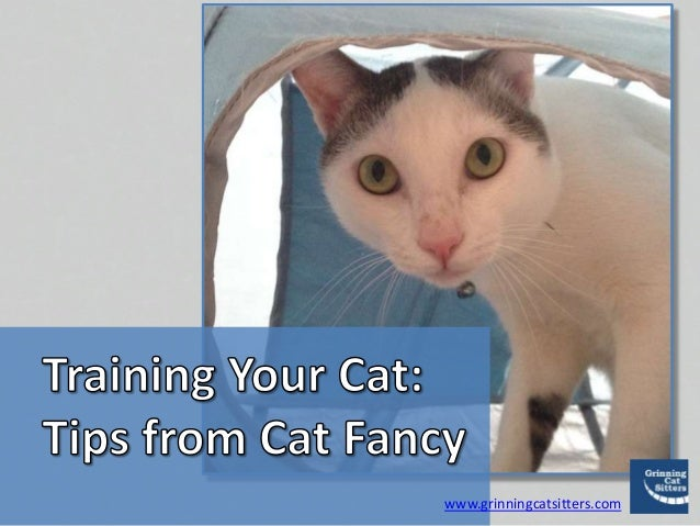 www.grinningcatsitters.com