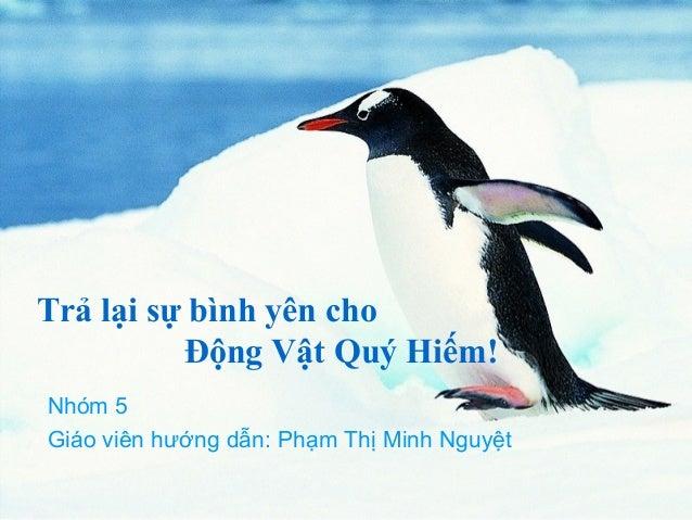 Trả lại sự bình yên cho Động Vật Quý Hiếm! Nhóm 5 Giáo viên hướng dẫn: Phạm Thị Minh Nguyệt
