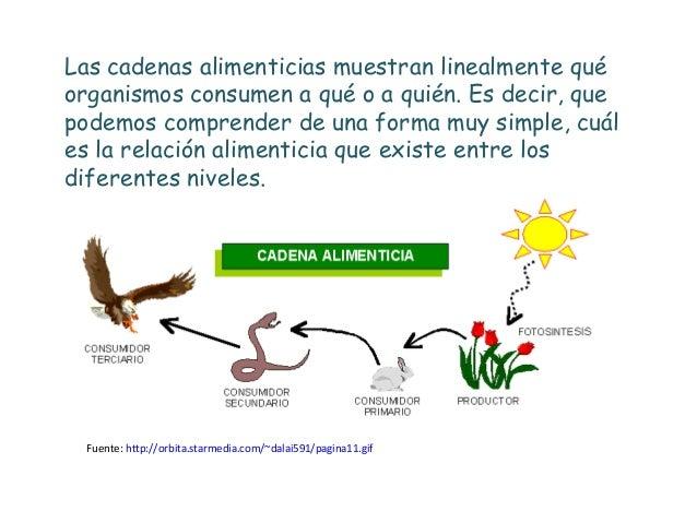 Trama alimenticia for Cuales son los cajeros red