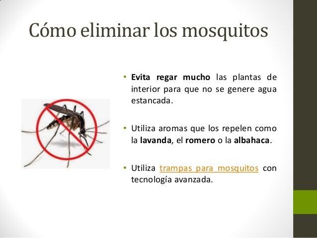 Informacion sobre trampas para mosquitos - Como ahuyentar los mosquitos ...