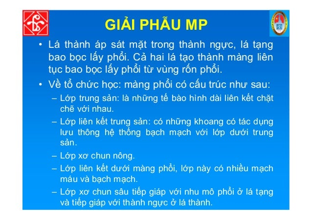 GI I PH U MP • Lá thành áp sát m t trong thành ng c, lá t ng bao b c l y ph i. C hai lá t o thành màng liên t c bao b c l ...