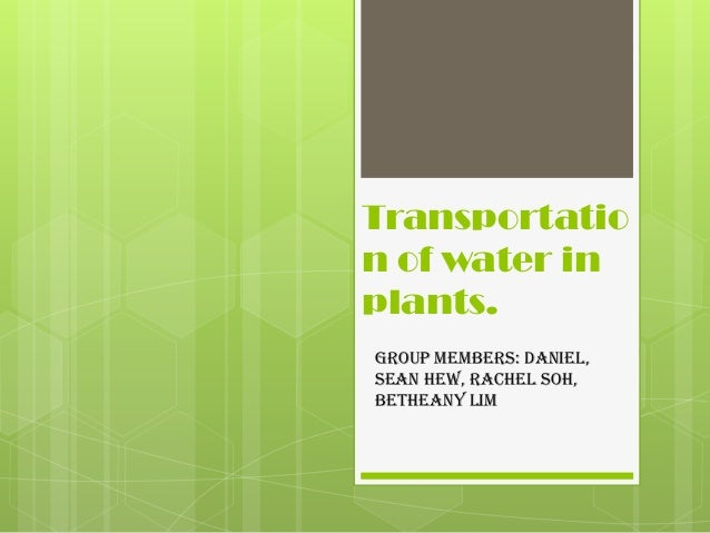 Transportation of water inplants.Group members: Daniel,Sean Hew, Rachel Soh,Betheany Lim