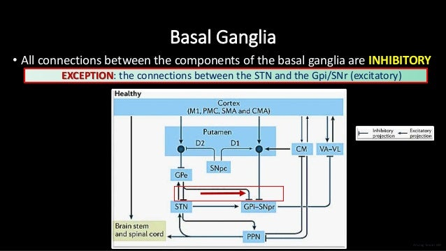 Basal Ganglia • All connections between the components of the basal ganglia are INHIBITORY EXCEPTION: the connections betw...