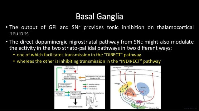 Basal Ganglia • The output of GPi and SNr provides tonic inhibition on thalamocortical neurons • The direct dopaminergic n...