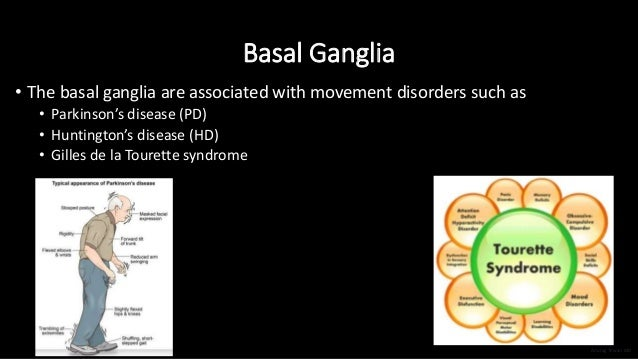 Basal Ganglia • The basal ganglia are associated with movement disorders such as • Parkinson's disease (PD) • Huntington's...