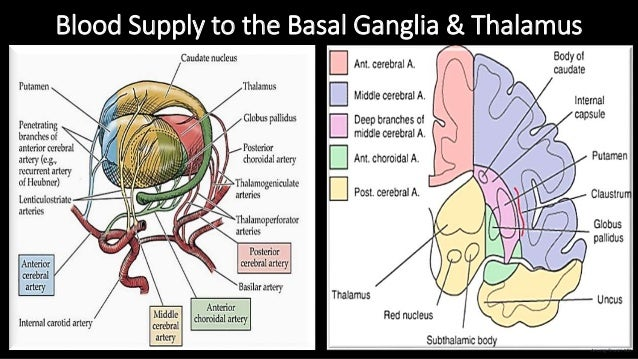 Blood Supply to the Basal Ganglia & Thalamus Anurag Tewari MD