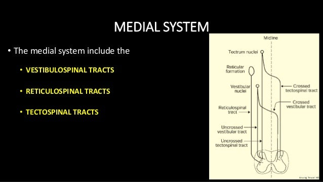 MEDIAL SYSTEM • The medial system include the • VESTIBULOSPINAL TRACTS • RETICULOSPINAL TRACTS • TECTOSPINAL TRACTS Anurag...