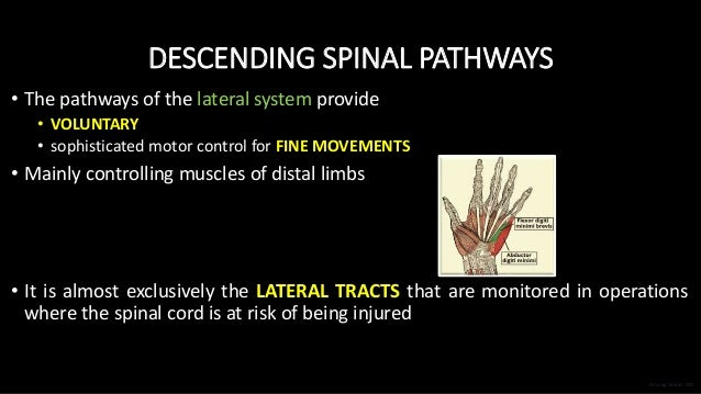 DESCENDING SPINAL PATHWAYS • The pathways of the lateral system provide • VOLUNTARY • sophisticated motor control for FINE...
