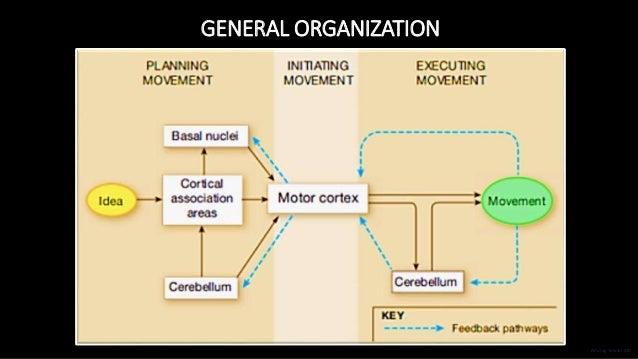 GENERAL ORGANIZATION Anurag Tewari MD